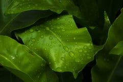 Regenachtige dag Stock Afbeeldingen