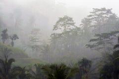 Regenachtige dag in Bali stock foto's