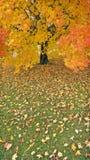 Regenachtige dag in de Herfst Royalty-vrije Stock Afbeeldingen