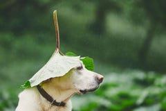 Regenachtige dag met hond in aard royalty-vrije stock fotografie