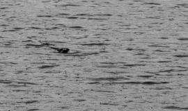 Regenachtige dag op zee royalty-vrije stock fotografie