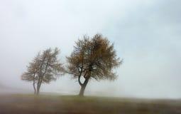 Regenachtige dagbomen Stock Afbeeldingen