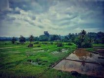 Regenachtige Dagen! Stock Afbeeldingen