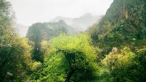 Regenachtige kalme aardscène van boslandschap in bergen stock video