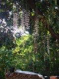 Regenachtige seizoenorchidee Royalty-vrije Stock Foto's