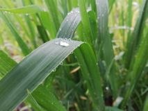 Regenachtige Tijdpic stock afbeeldingen