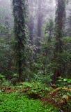 RegenBäume des Waldes und Anlagen stockfotos