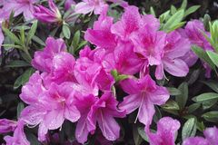 Regenbloemen Stock Foto