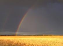 Regenbogen über dem Feld Stockfotos