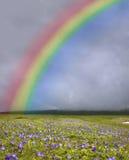 Regenbogen über dem grünen Feld lizenzfreies stockbild