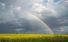 Regenbogen über dem Rapssamenfeld Stockbilder