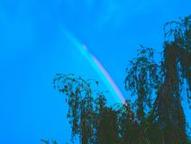 Regenbogen über den Bäumen 3 Lizenzfreies Stockfoto