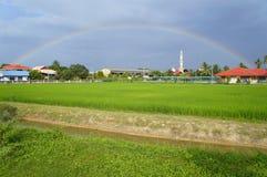 Regenbogen über einem Reisfeld Stockfotografie