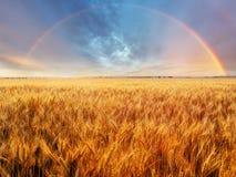 Regenbogen über Feld Lizenzfreie Stockbilder