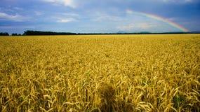 Regenbogen über Feld des goldenen Weizens Lizenzfreie Stockfotos