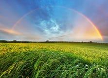 Regenbogen über Frühlingsfeld Stockfotos