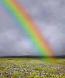 Regenbogen über geblühtem Feld lizenzfreie stockfotografie