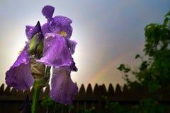 Regenbogen über Iris Stockfotografie
