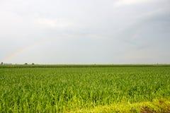 Regenbogen über Vercelli-Landschaft Stockfotografie