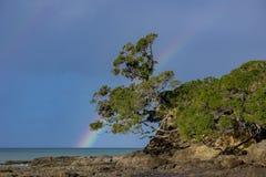 Regenbogen über Waipu-Bucht mit Pohutakawa Stockfoto