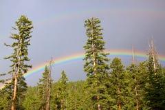 Regenbogen über Wald Stockbilder