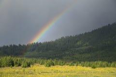 Regenbogen über Wald Lizenzfreies Stockbild