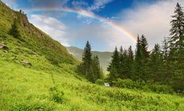 Regenbogen über Wald lizenzfreie stockbilder