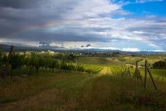 Regenbogen über Weinberg Stockfotografie