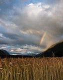 Regenbogen über Weizen Lizenzfreie Stockfotos