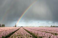 Regenbogen über Windmühlen- und Blumenfeldern Lizenzfreies Stockbild