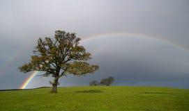 Regenbogen Stockbild