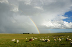 Regenbogen auf Grasland Lizenzfreies Stockfoto