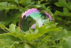 Regenbogen-Blase auf Blättern Stockbild