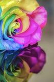 Regenbogen-Blume mit Reflexion lizenzfreies stockfoto