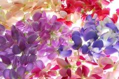 Regenbogen der Blumen lizenzfreie stockbilder