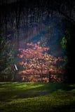 Regenbogen in der Dunkelheit Stockfotografie
