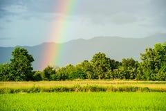 Regenbogen an der Mitte von Reisfeldern in Thailand Lizenzfreies Stockbild