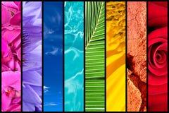 Regenbogen der Natur Lizenzfreie Stockbilder