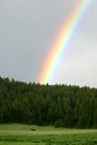 Regenbogen-Elche Stockfoto