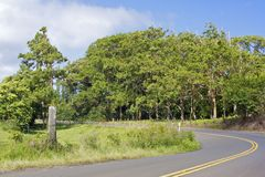 Regenbogen-Eukalyptus-Waldung Lizenzfreies Stockfoto