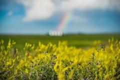 Regenbogen hinter Canolafeld auf Grasland Lizenzfreie Stockfotografie