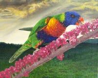 Regenbogen lorikeet Malerei lizenzfreie stockbilder