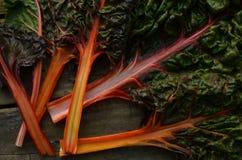 Regenbogen-Mangoldgemüse Stockbild