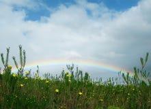 Regenbogen mit Gänseblümchen Stockfoto