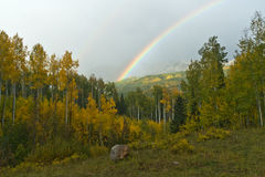 Regenbogen-oben genannte Fallaspen-Waldlandschaft Stockfotografie