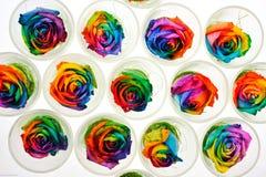Regenbogen Rose Lizenzfreie Stockbilder