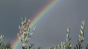 Regenbogen und Ölzweig stock footage