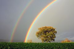 Regenbogen und Eiche, Wales Lizenzfreie Stockbilder