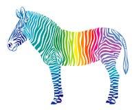 Regenbogen Zebra Lizenzfreie Stockbilder