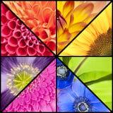 Regenbogencollage von Blumen im quadratischen Rahmen Stockfotografie